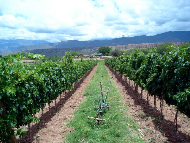 bodega-valles-calchaquies-05