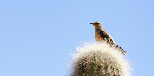 aves-cachi-salta